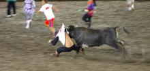 bull fighting ,